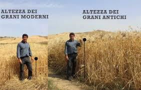 Varietà dei grani